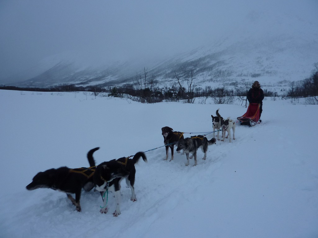 Landscape shot with dog-sled in Tromso... I'm ready for a kebab!